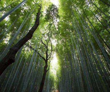 eHealth, mHealth & Co: So behalten Sie den Überblick im digitalen Dschungel