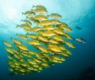 Träge wie ein Supertanker oder wendig wie ein Fisch? Mit Agile Marketing durch stürmische Zeiten navigieren